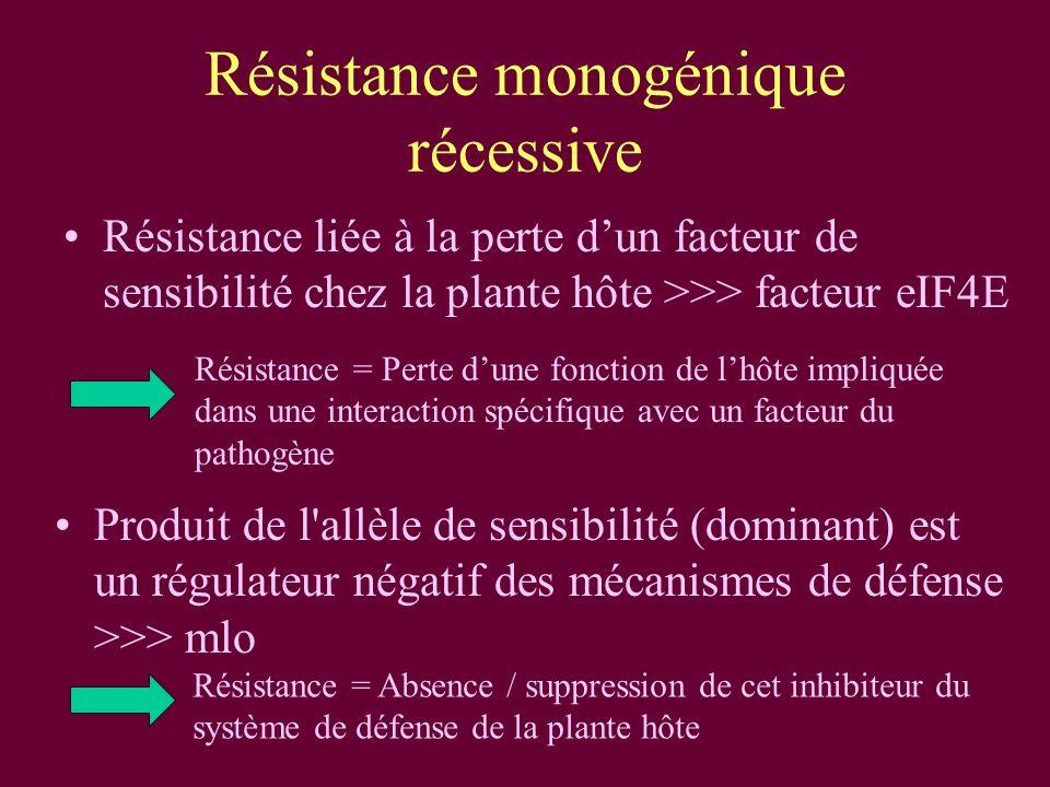 Résistance monogénique récessive Résistance liée à la perte dun facteur de sensibilité chez la plante hôte >>> facteur eIF4E Produit de l allèle de sensibilité (dominant) est un régulateur négatif des mécanismes de défense >>> mlo Résistance = Perte dune fonction de lhôte impliquée dans une interaction spécifique avec un facteur du pathogène Résistance = Absence / suppression de cet inhibiteur du système de défense de la plante hôte