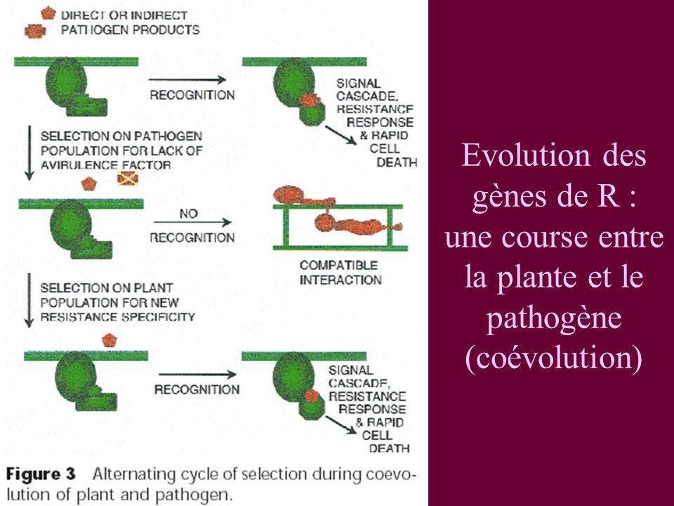 Evolution des gènes de R : une course entre la plante et le pathogène (coévolution)