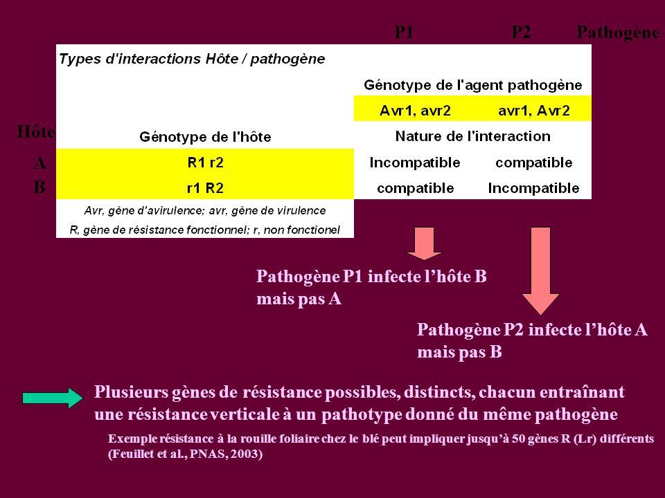 Pathogène P1 infecte lhôte B mais pas A B A Hôte P1P2Pathogène Pathogène P2 infecte lhôte A mais pas B Plusieurs gènes de résistance possibles, distincts, chacun entraînant une résistance verticale à un pathotype donné du même pathogène Exemple résistance à la rouille foliaire chez le blé peut impliquer jusquà 50 gènes R (Lr) différents (Feuillet et al., PNAS, 2003)