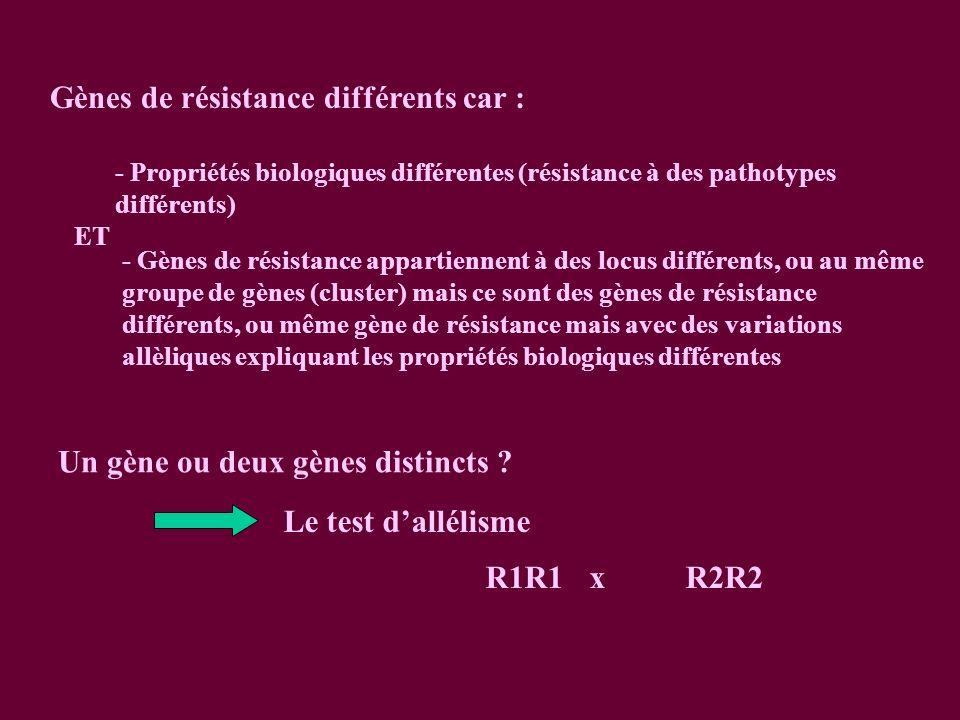 Gènes de résistance différents car : - Propriétés biologiques différentes (résistance à des pathotypes différents) ET - Gènes de résistance appartiennent à des locus différents, ou au même groupe de gènes (cluster) mais ce sont des gènes de résistance différents, ou même gène de résistance mais avec des variations allèliques expliquant les propriétés biologiques différentes Le test dallélisme R1R1xR2R2 Un gène ou deux gènes distincts ?