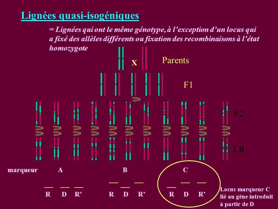 Lignées quasi-isogéniques = Lignées qui ont le même génotype, à lexception dun locus qui a fixé des allèles différents ou fixation des recombinaisons à létat homozygote RDRRDRRDR marqueurABC Locus marqueur C lié au gène introduit à partir de D F1 F2 LR Parents X