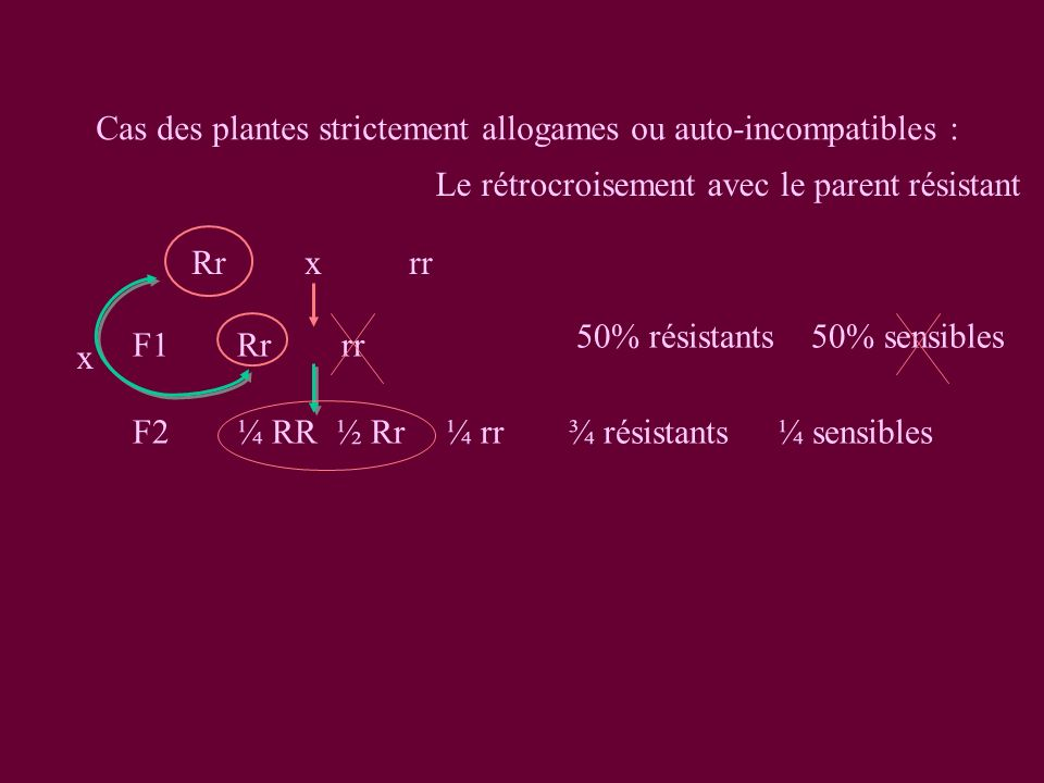 Cas des plantes strictement allogames ou auto-incompatibles : Rrxrr F1Rrrr 50% résistants 50% sensibles F2 ¼ RR ½ Rr¼ rr¾ résistants¼ sensibles x Le rétrocroisement avec le parent résistant