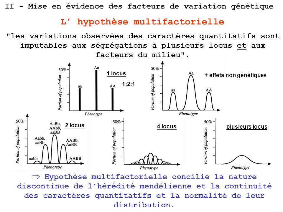 + effets non génétiques 2 locus 4 locus plusieurs locus 1 locus 1:2:1 II - Mise en évidence des facteurs de variation génétique L hypothèse multifacto