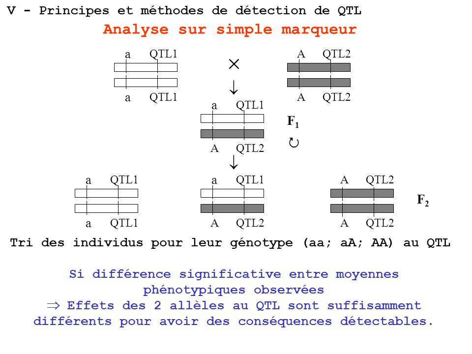 a a a A a A A a A AA a QTL1 QTL2 F1F1 F2F2 Analyse sur simple marqueur Tri des individus pour leur génotype (aa; aA; AA) au QTL Si différence signific