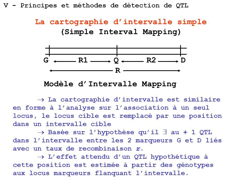 La cartographie dintervalle simple (Simple Interval Mapping) La cartographie dintervalle est similaire en forme à lanalyse sur lassociation à un seul