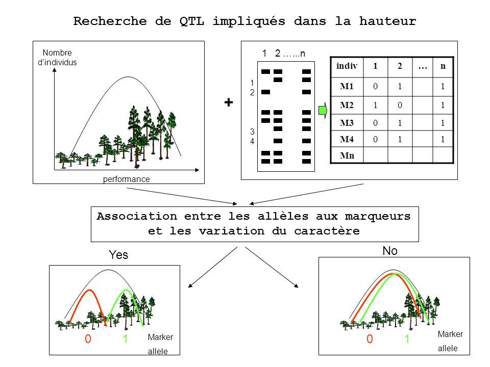 Association entre les allèles aux marqueurs et les variation du caractère Nombre dindividus performance + 1 2 …...n 1234 1234 indiv12…n M1011 M2101 M3