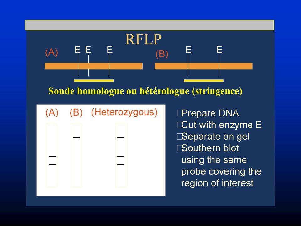 Sonde homologue ou hétérologue (stringence)