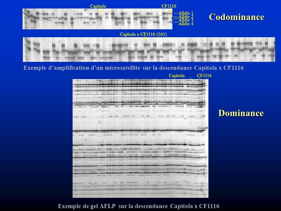 CapitolaCF1116 Capitola x CF1116 (165) Allèle 1 Allèle 4 Allèle 2 Allèle 3 Exemple damplification dun microsatellite sur la descendance Capitola x CF1