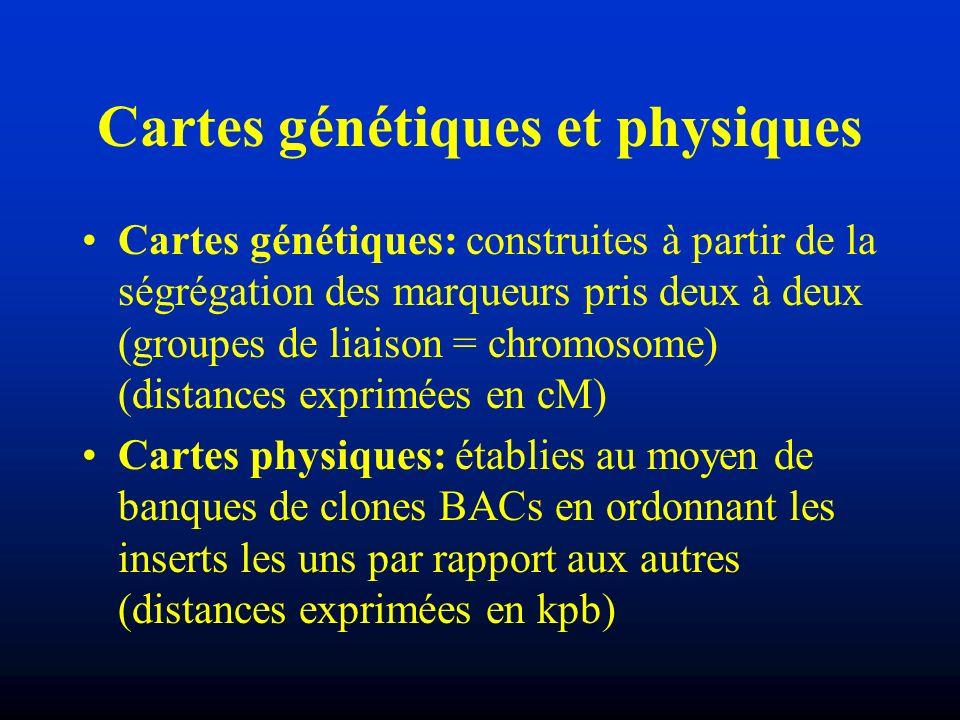 Cartes génétiques et physiques Cartes génétiques: construites à partir de la ségrégation des marqueurs pris deux à deux (groupes de liaison = chromoso