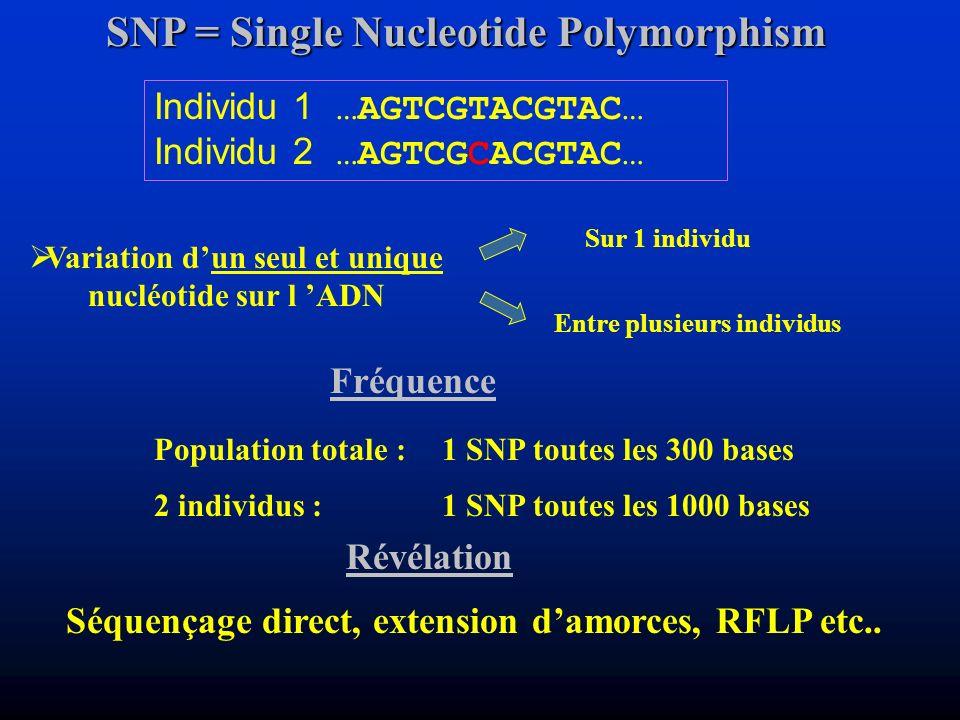 Révélation Population totale :1 SNP toutes les 300 bases 2 individus :1 SNP toutes les 1000 bases SNP = Single Nucleotide Polymorphism Variation dun s