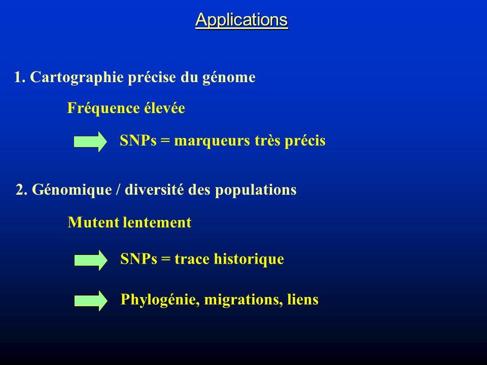 1. Cartographie précise du génome 2. Génomique / diversité des populations Fréquence élevée SNPs = marqueurs très précis Mutent lentement SNPs = trace