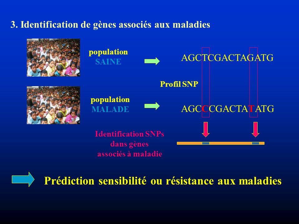 3. Identification de gènes associés aux maladies population SAINE population MALADE Prédiction sensibilité ou résistance aux maladies Profil SNP Ident