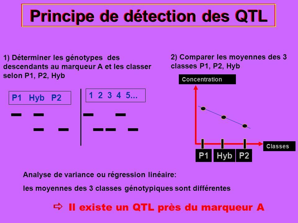 Principe de détection des QTL 1) Déterminer les génotypes des descendants au marqueur A et les classer selon P1, P2, Hyb P1 Hyb P2 1 2 3 4 5... 2) Com
