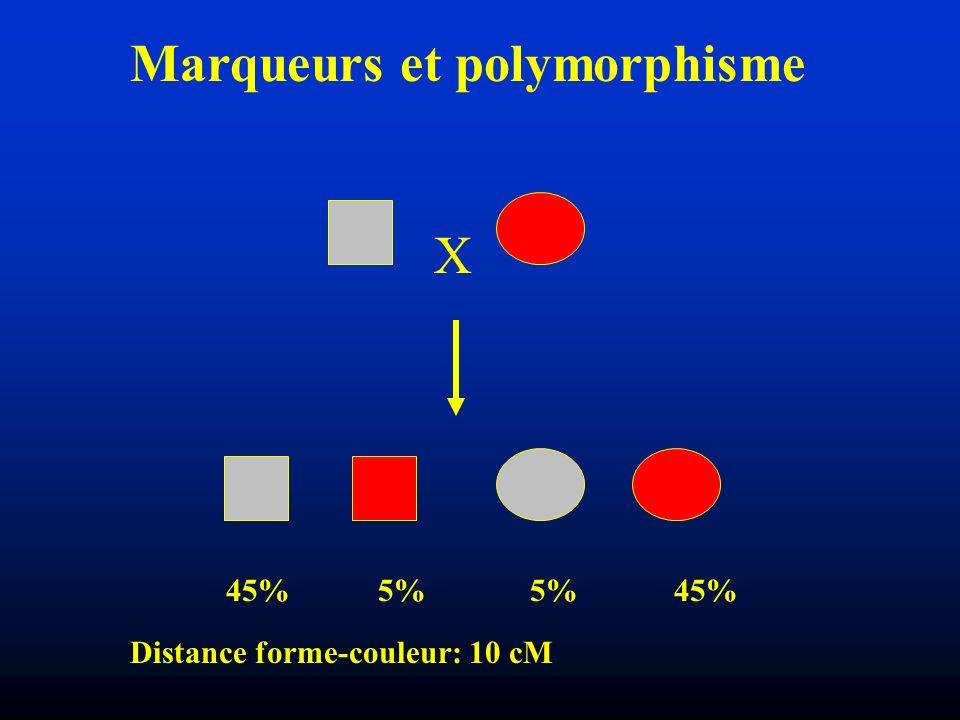 Révélation Population totale :1 SNP toutes les 300 bases 2 individus :1 SNP toutes les 1000 bases SNP = Single Nucleotide Polymorphism Variation dun seul et unique nucléotide sur l ADN Sur 1 individu Entre plusieurs individus Individu 1 …AGTCGTACGTAC… Individu 2 …AGTCGCACGTAC… Fréquence Séquençage direct, extension damorces, RFLP etc..