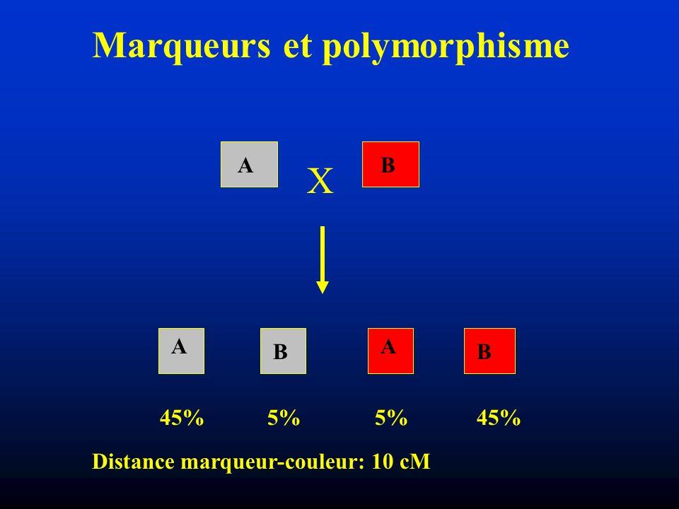 Marqueurs et polymorphisme X 45% 5% 5% 45% Distance marqueur-couleur: 10 cM AB A B A B