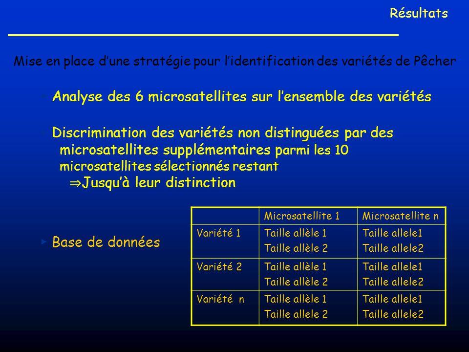 Analyse des 6 microsatellites sur lensemble des variétés Discrimination des variétés non distinguées par des microsatellites supplémentaires p armi le