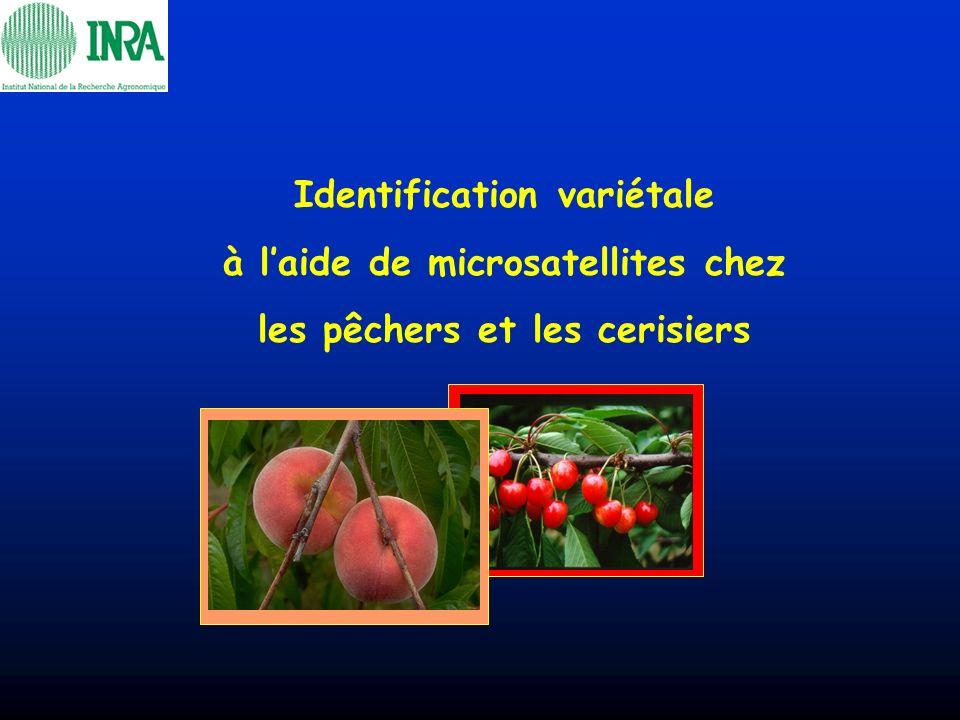 Identification variétale à laide de microsatellites chez les pêchers et les cerisiers