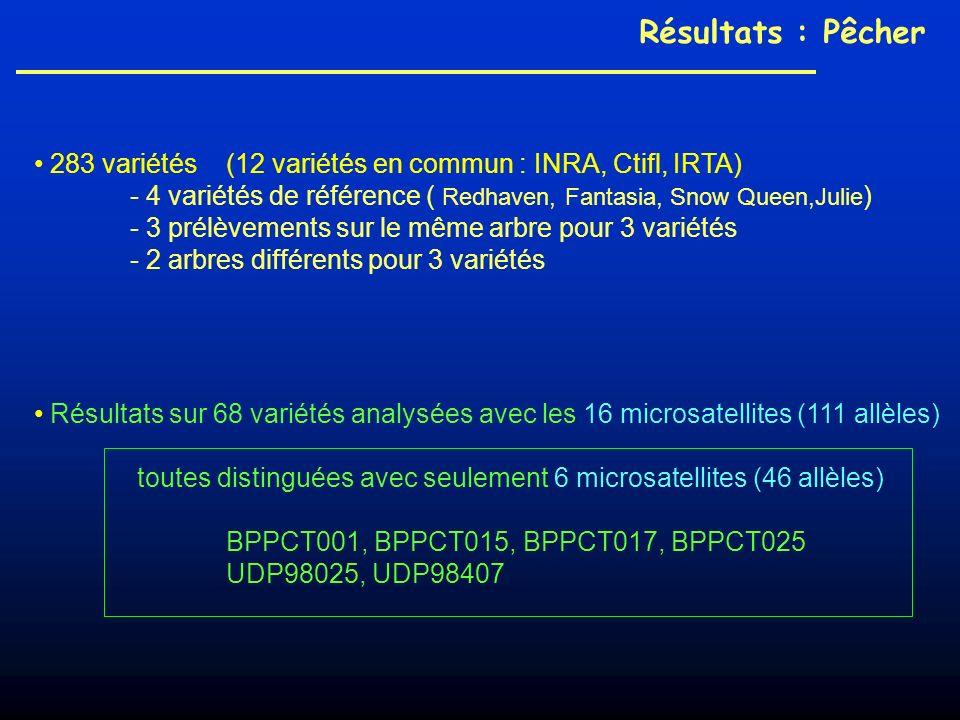 283 variétés (12 variétés en commun : INRA, Ctifl, IRTA) - 4 variétés de référence ( Redhaven, Fantasia, Snow Queen,Julie ) - 3 prélèvements sur le même arbre pour 3 variétés - 2 arbres différents pour 3 variétés Résultats : Pêcher Résultats sur 68 variétés analysées avec les 16 microsatellites (111 allèles) toutes distinguées avec seulement 6 microsatellites (46 allèles) BPPCT001, BPPCT015, BPPCT017, BPPCT025 UDP98025, UDP98407