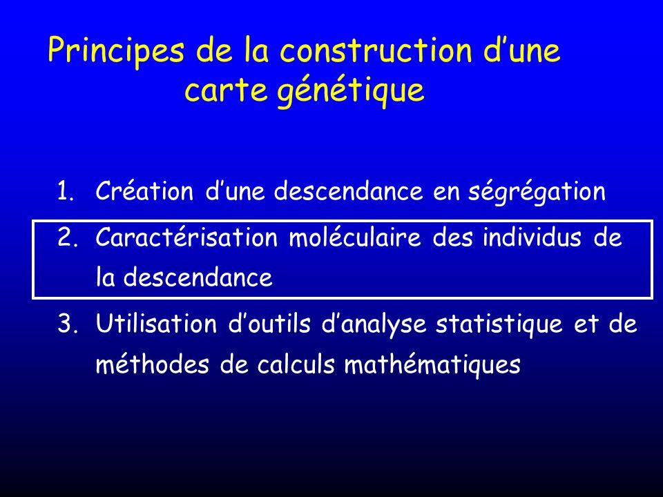 Principes de la construction dune carte génétique 1.Création dune descendance en ségrégation 2.Caractérisation moléculaire des individus de la descend