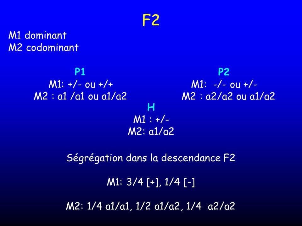 F2 H M1 : +/- M2: a1/a2 Ségrégation dans la descendance F2 M1: 3/4 [+], 1/4 [-] M2: 1/4 a1/a1, 1/2 a1/a2, 1/4 a2/a2 P1 M1: +/- ou +/+ M2 : a1 /a1 ou a