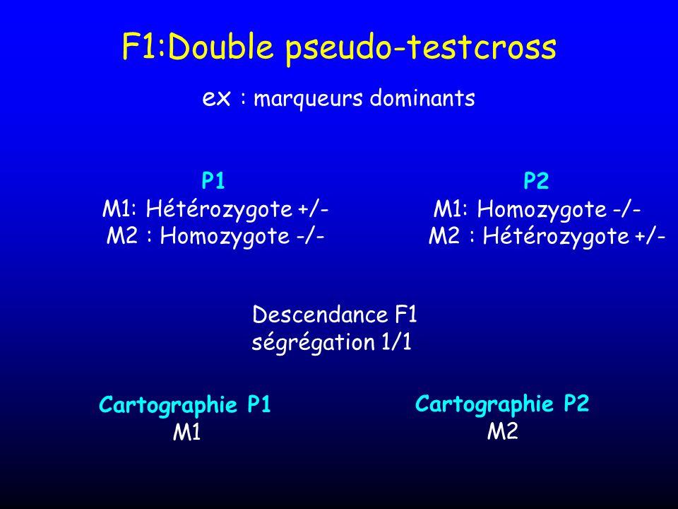 F1:Double pseudo-testcross ex : marqueurs dominants P1 M1: Hétérozygote +/- M2 : Homozygote -/- Descendance F1 ségrégation 1/1 P2 M1: Homozygote -/- M