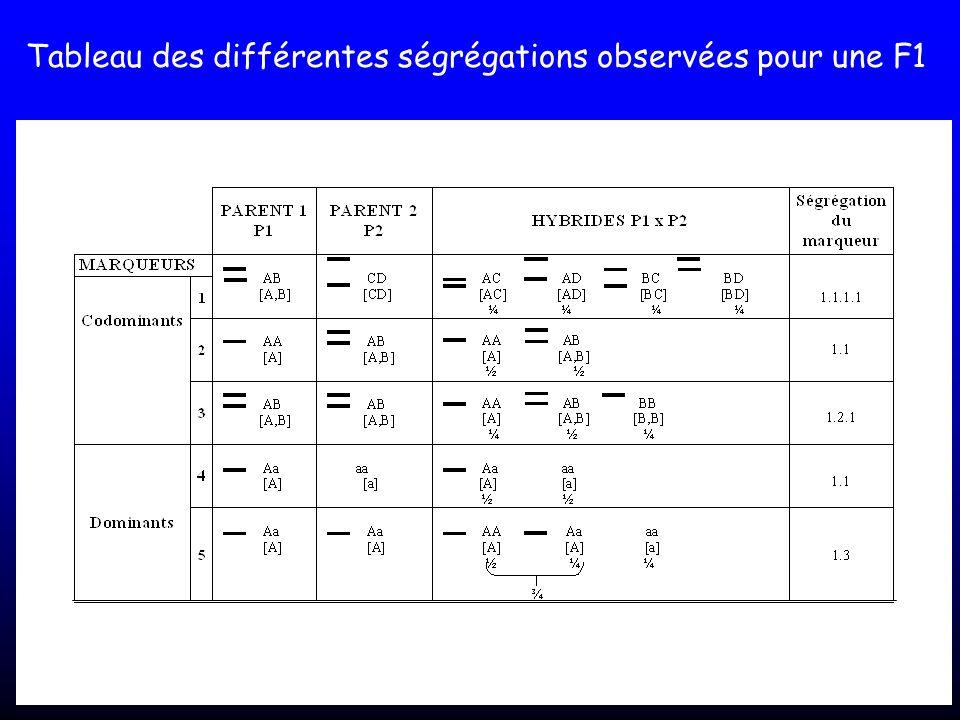 Tableau des différentes ségrégations observées pour une F1