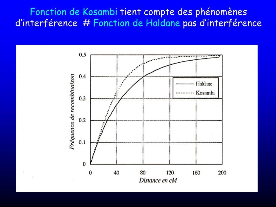 Fonction de Kosambi tient compte des phénomènes dinterférence # Fonction de Haldane pas dinterférence