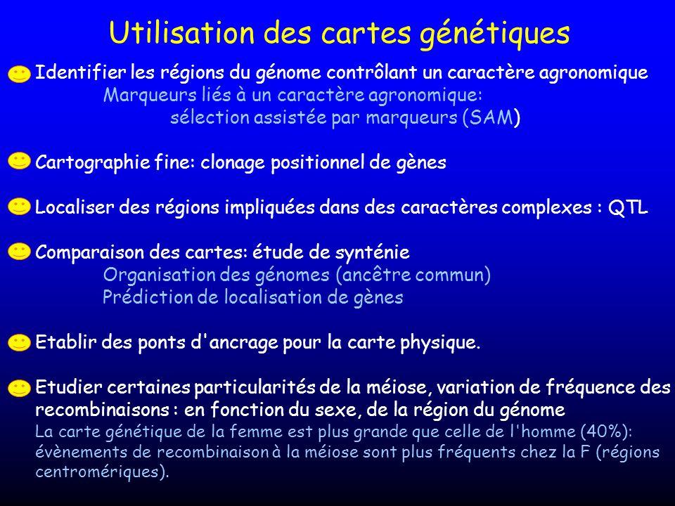 Utilisation des cartes génétiques Identifier les régions du génome contrôlant un caractère agronomique Marqueurs liés à un caractère agronomique: séle