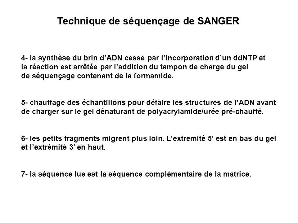 Technique de séquençage de SANGER 4- la synthèse du brin dADN cesse par lincorporation dun ddNTP et la réaction est arrêtée par laddition du tampon de