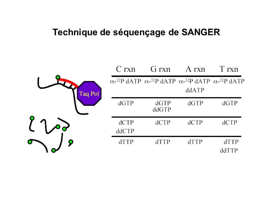 Technique de séquençage de SANGER