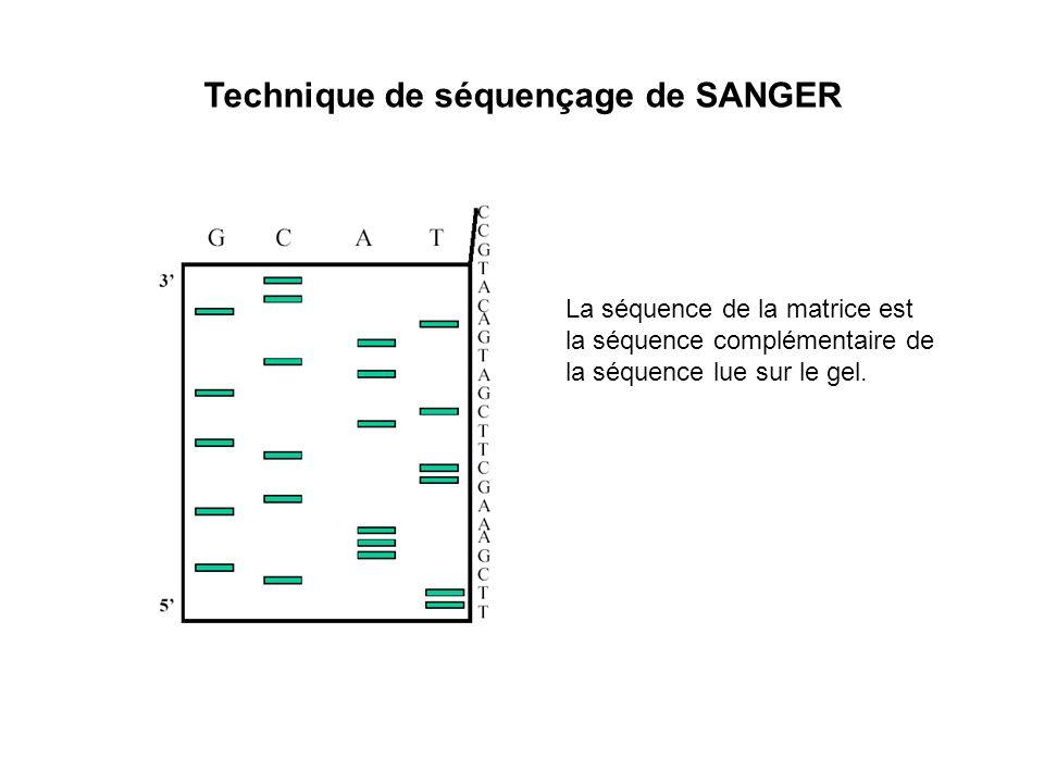 La séquence de la matrice est la séquence complémentaire de la séquence lue sur le gel.