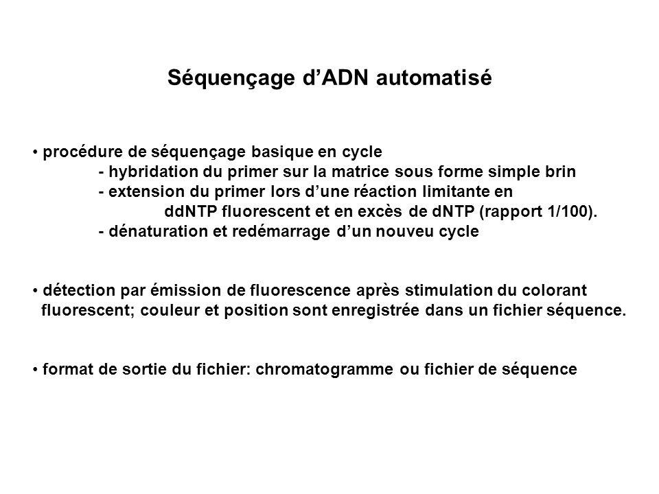 Séquençage dADN automatisé procédure de séquençage basique en cycle - hybridation du primer sur la matrice sous forme simple brin - extension du prime