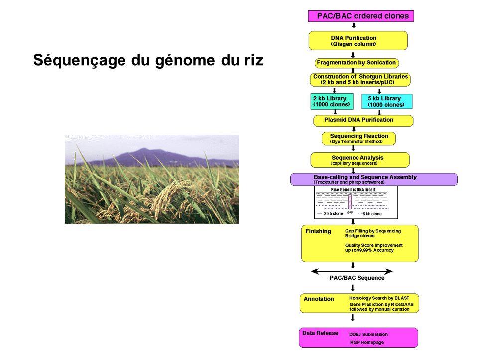 Séquençage du génome du riz