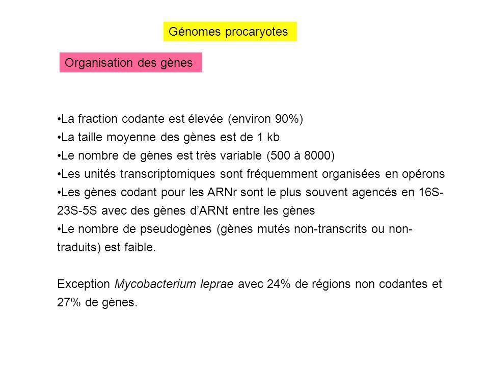 Organisation des gènes Génomes procaryotes La fraction codante est élevée (environ 90%) La taille moyenne des gènes est de 1 kb Le nombre de gènes est