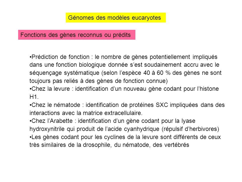 Génomes des modèles eucaryotes Fonctions des gènes reconnus ou prédits Prédiction de fonction : le nombre de gènes potentiellement impliqués dans une