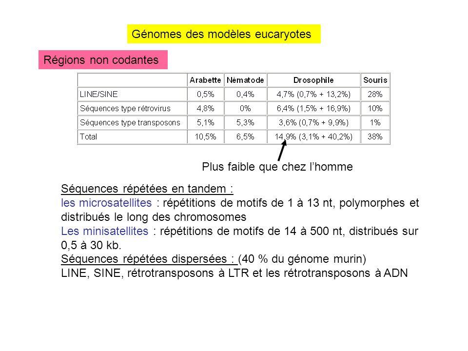 Génomes des modèles eucaryotes Régions non codantes Plus faible que chez lhomme Séquences répétées en tandem : les microsatellites : répétitions de mo