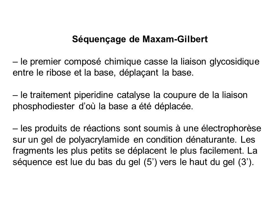 Séquençage de Maxam-Gilbert – le premier composé chimique casse la liaison glycosidique entre le ribose et la base, déplaçant la base. – le traitement