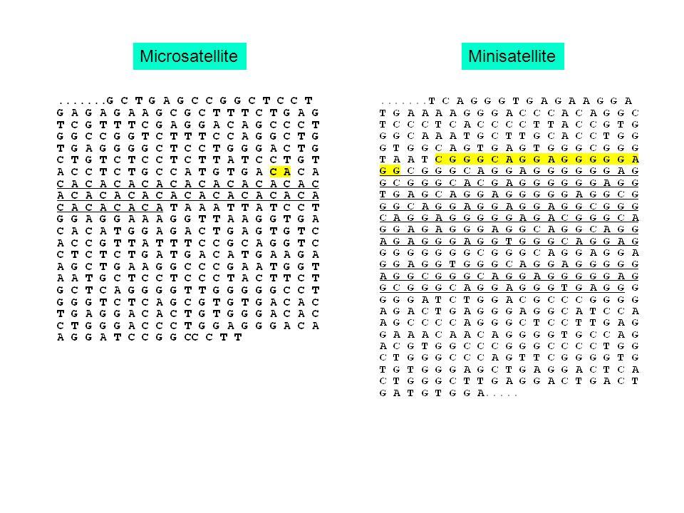 MicrosatelliteMinisatellite