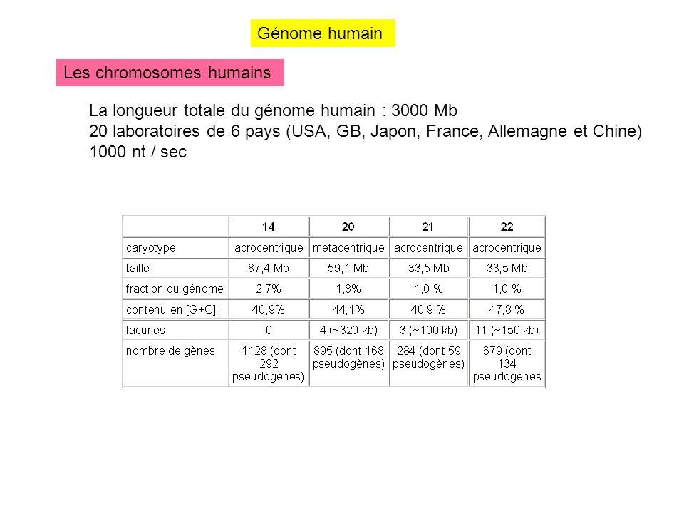 Génome humain Les chromosomes humains La longueur totale du génome humain : 3000 Mb 20 laboratoires de 6 pays (USA, GB, Japon, France, Allemagne et Ch