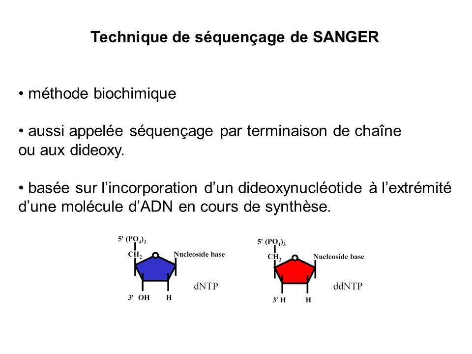 méthode biochimique aussi appelée séquençage par terminaison de chaîne ou aux dideoxy. basée sur lincorporation dun dideoxynucléotide à lextrémité dun