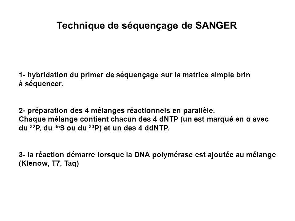 1- hybridation du primer de séquençage sur la matrice simple brin à séquencer. 2- préparation des 4 mélanges réactionnels en parallèle. Chaque mélange