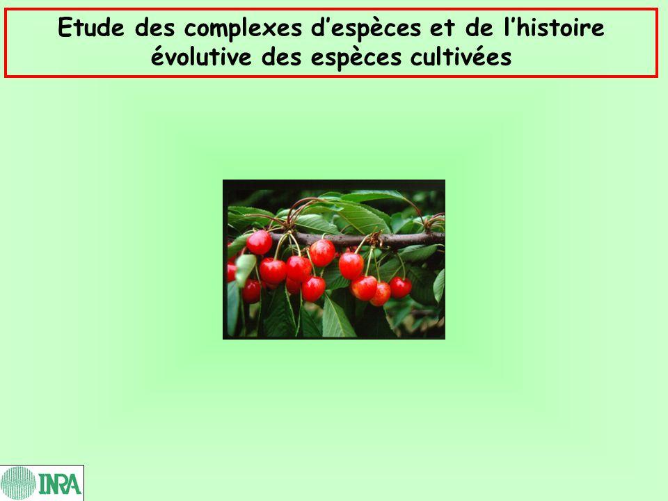 Etude des complexes despèces et de lhistoire évolutive des espèces cultivées