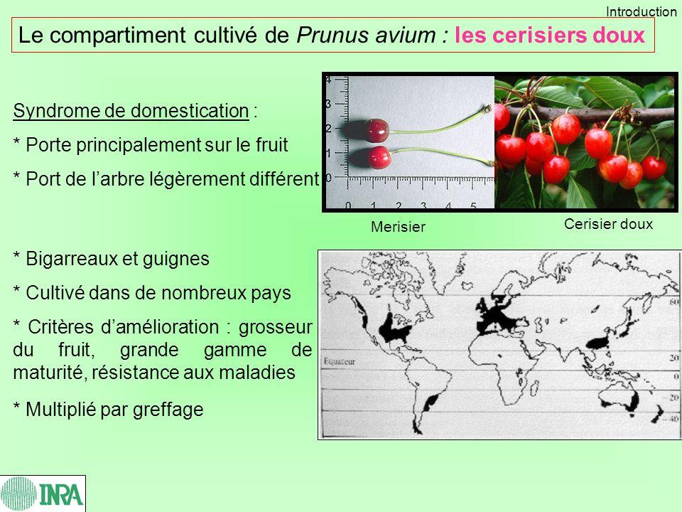 Le compartiment cultivé de Prunus avium : les cerisiers doux Syndrome de domestication : * Porte principalement sur le fruit * Port de larbre légèreme
