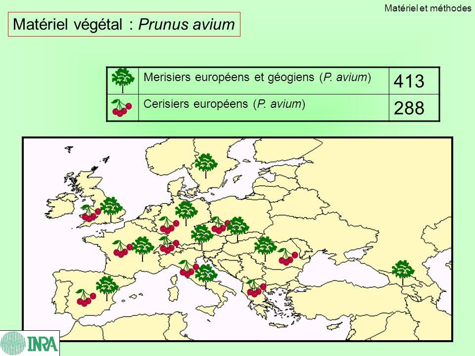 Matériel végétal : Prunus avium Merisiers européens et géogiens (P. avium) 413 Cerisiers européens (P. avium) 288 Matériel et méthodes