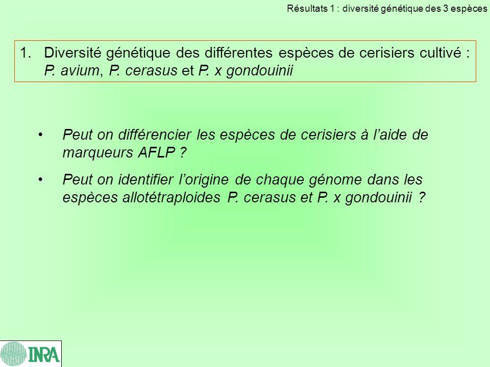 Les marqueurs AFLP Seules les bandes intenses et reproductibles sont prises en compte 3 témoins sur chaque gel, reproductibilité denviron 97% 75 marqueurs reproductibles sur les 785 génotypes analysés Profil AFLP obtenu avec le couple damorces EcoRI+ACA, MseI+CG Résultats 1 : diversité génétique des 3 espèces
