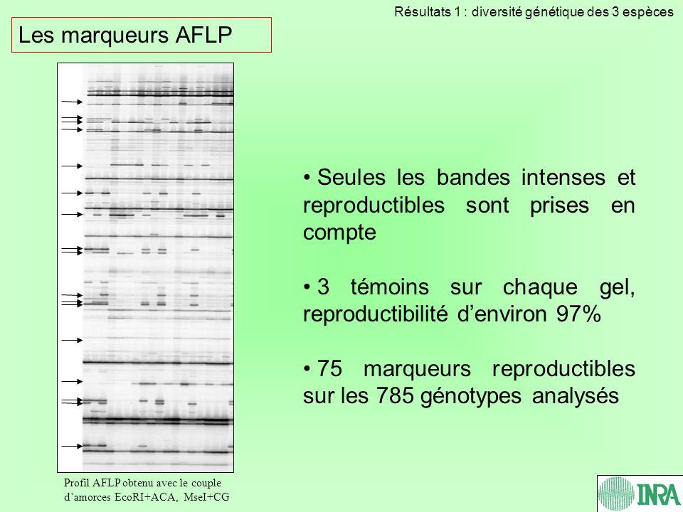 Les marqueurs AFLP Seules les bandes intenses et reproductibles sont prises en compte 3 témoins sur chaque gel, reproductibilité denviron 97% 75 marqu