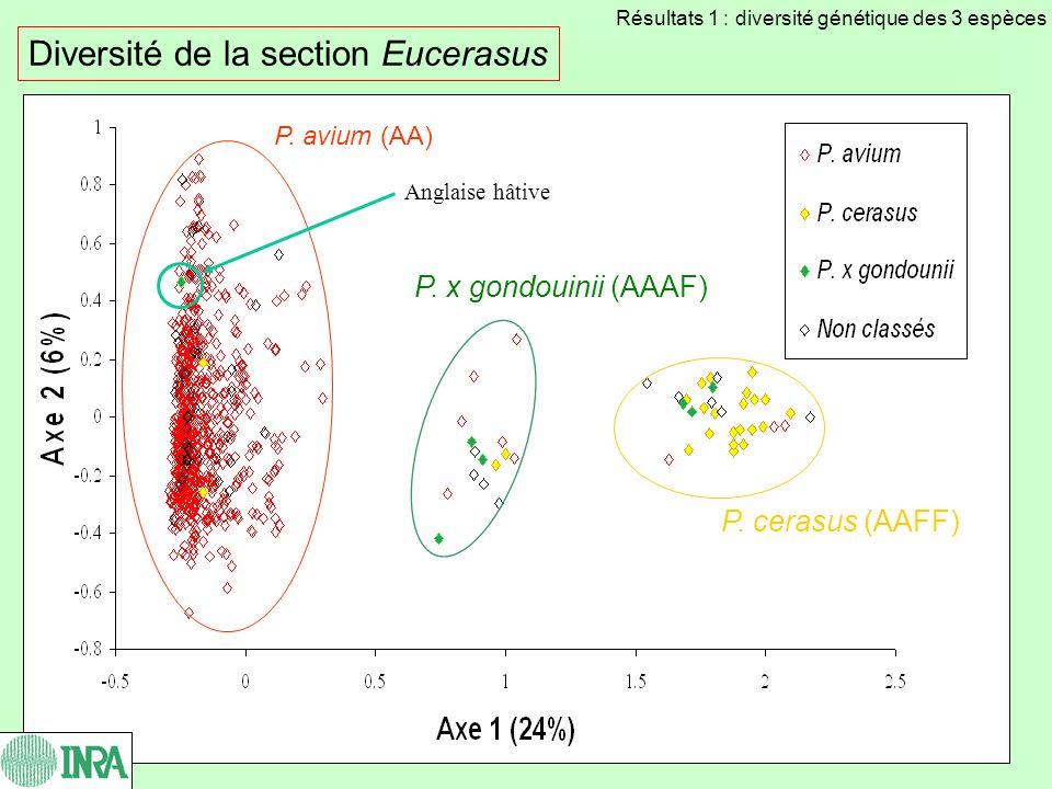 Diversité de la section Eucerasus P. avium (AA) P. x gondouinii (AAAF) P. cerasus (AAFF) Anglaise hâtive Résultats 1 : diversité génétique des 3 espèc