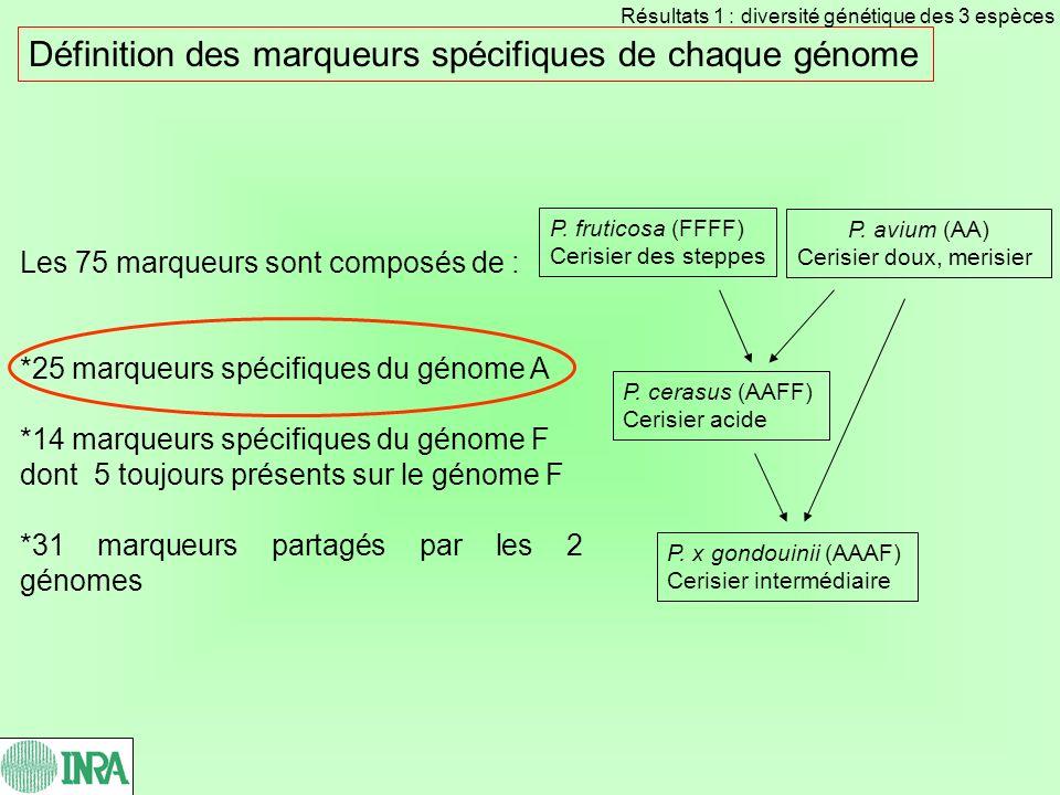 Définition des marqueurs spécifiques de chaque génome Les 75 marqueurs sont composés de : *25 marqueurs spécifiques du génome A *14 marqueurs spécifiq