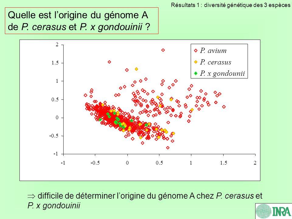 -0.5 0 0.5 1 1.5 2 -0.500.511.52 P. avium P. cerasus P. x gondounii Quelle est lorigine du génome A de P. cerasus et P. x gondouinii ? difficile de dé
