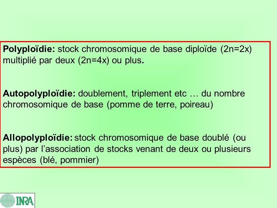 Polyploïdie: stock chromosomique de base diploïde (2n=2x) multiplié par deux (2n=4x) ou plus. Autopolyploïdie: doublement, triplement etc … du nombre